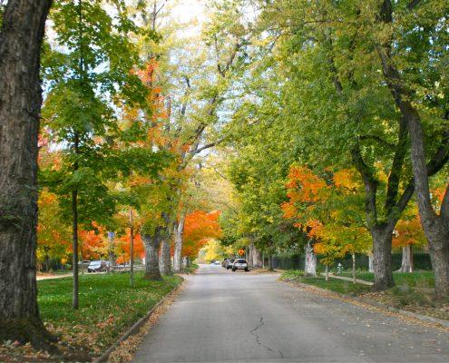 Mapleton-Hill-Trees-495x400 Mapleton Hill