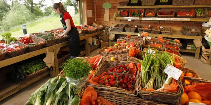 farmstand Detoxing the Body to Make Way for the New